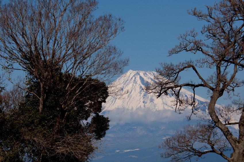 2013 01 20 井田雑木の間から D2x D (91)S