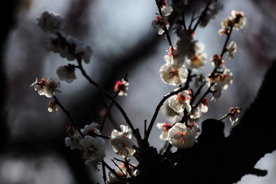 2013 03 12 梅 城沼 D3x (13)