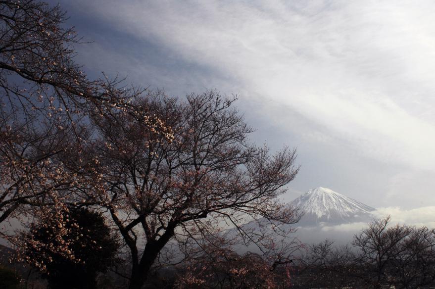 2013 03 23 J 興徳寺 D2x (24)s