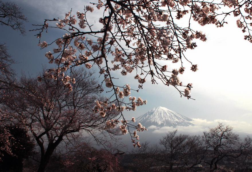 2013 03 23 J 興徳寺 D2x (25)s