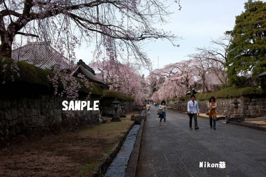2013 03 23 R大石寺 D3X (50)
