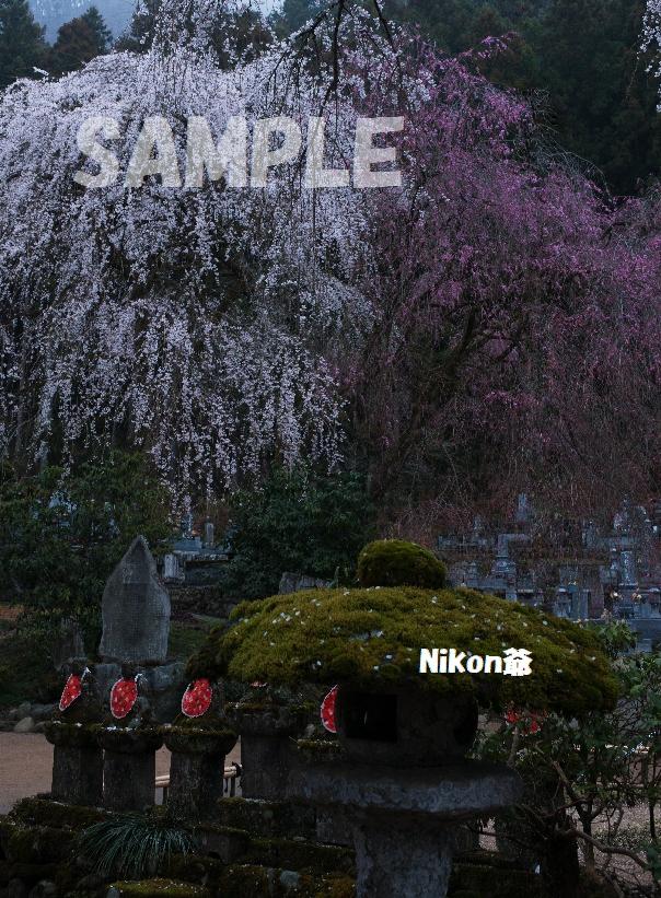 2013 03 31 青雲寺5s