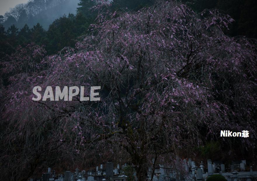 2013 03 31 青雲寺4s