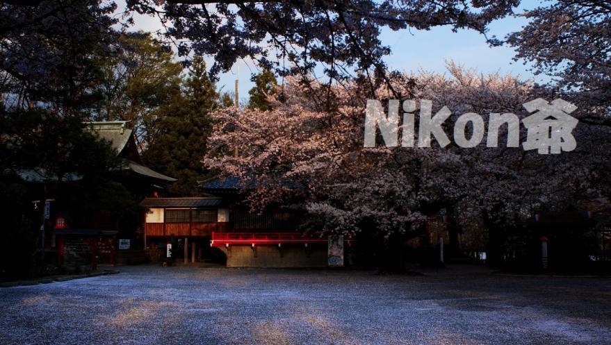 城沼 桜 吹雪の跡 (77)x3s