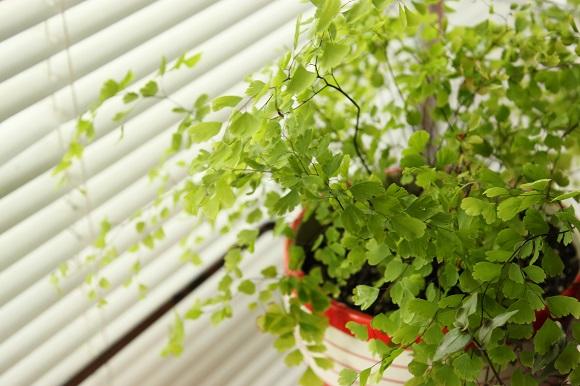 観葉植物ー1