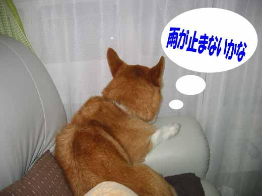 IMG_amega-1.jpg