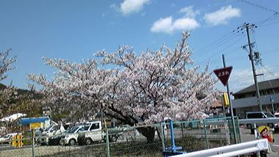 IMG_saku.jpg