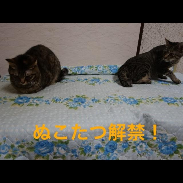 201411182302484da.jpg