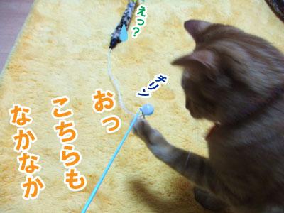 20100507f.jpg
