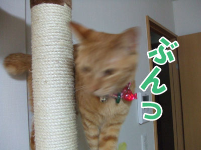 20100510b.jpg