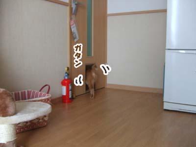 20100806c.jpg