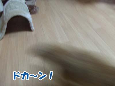 20100913d.jpg