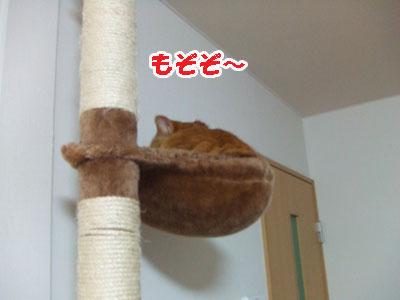 20110117d.jpg