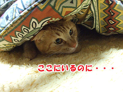 20110310d.jpg