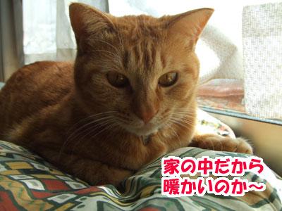 20110325f.jpg