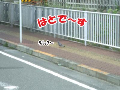 20110603c.jpg