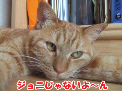 20110709h.jpg