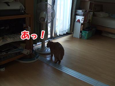 20110714a.jpg