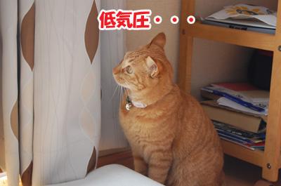 20110920b.jpg