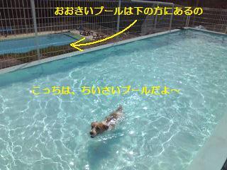 みみ、泳ぐ!!