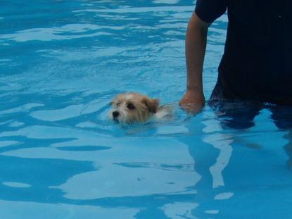 泳がされる