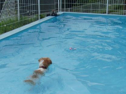 泳ぎマス!