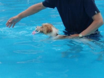泳がされるー