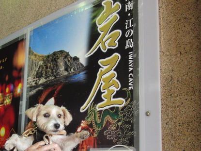 江の島・岩屋に行きました