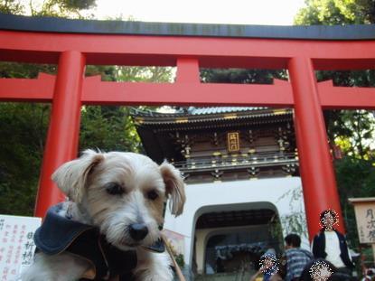 江の島神社にて