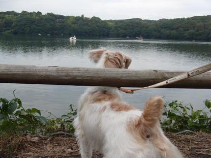 一碧湖に着きました!