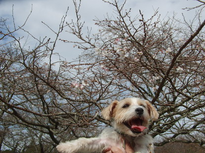 十月桜が咲いてたよ