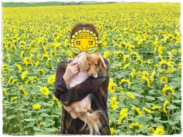 ひまわり畑~