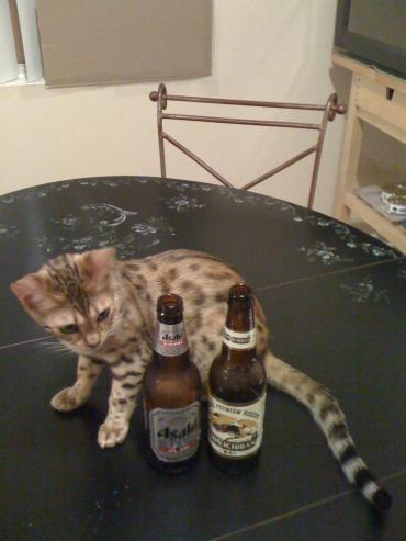 m beer