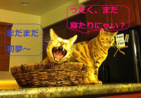 Mb8_20130106172313.jpg