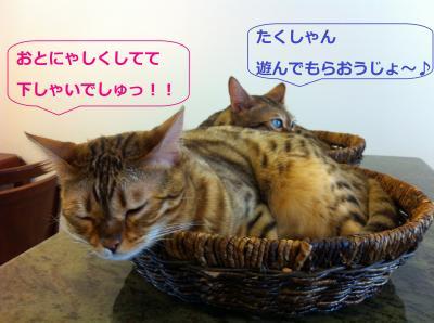 b_20120810153336.jpg