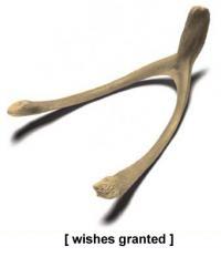 wishbone.jpg