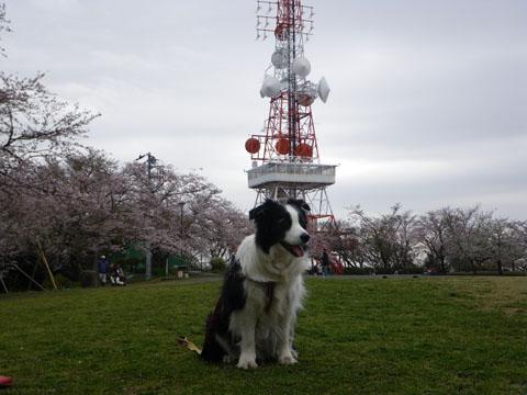 電波塔の前で