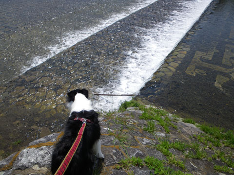 鴨川で泳ぎたいな