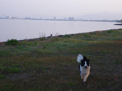 琵琶湖湖畔を散歩
