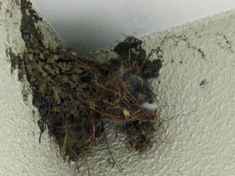 巣が壊されてる~!!!!