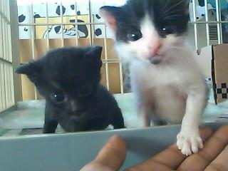 黒・白黒猫