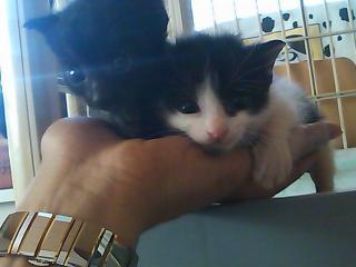 黒・白黒猫2