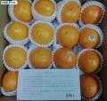 JALUX ネーブルオレンジ 201409