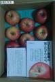 サンデー 葉取らずリンゴ 201408