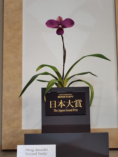 世界らん展日本大賞20130216