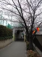 megurigawa3.jpg