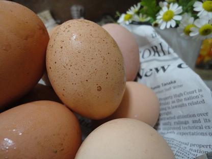egg1_20110520205705.jpg