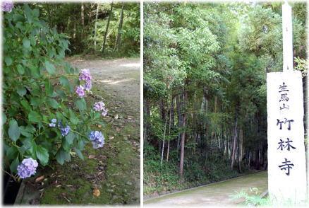 13.8.2紫陽花