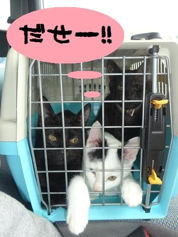 3子ネコ病院へ