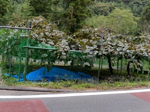 2014.10.12 富来田の畑 001 (48)